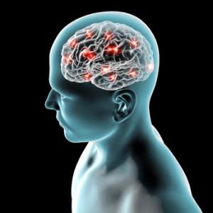 Hirn mit Synapsen